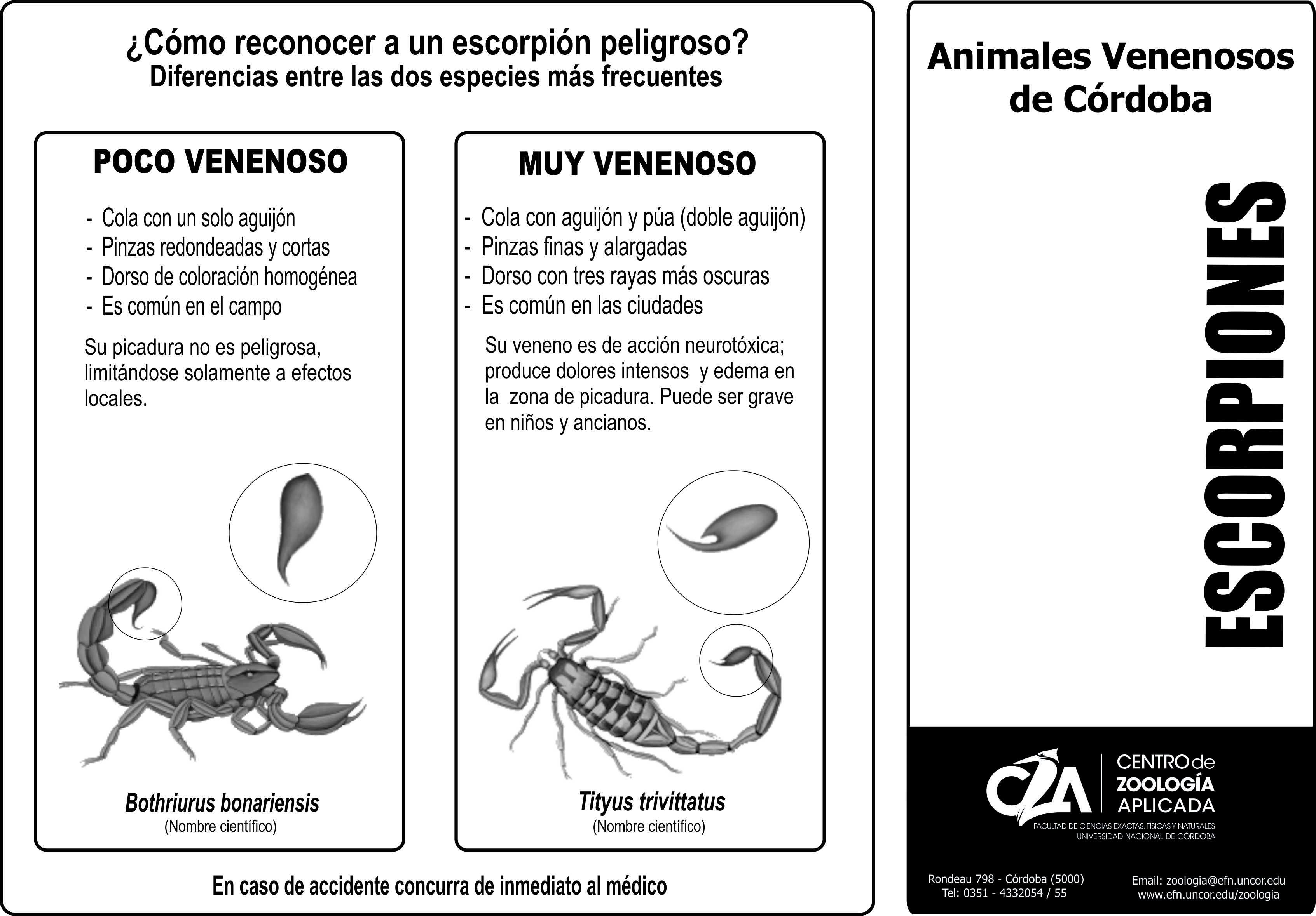 folleto escorpiones negro